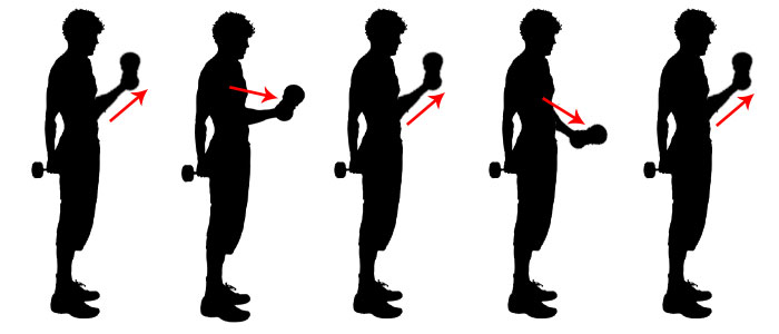 Biceps - Fractional reps