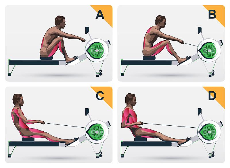 Proper rowing form